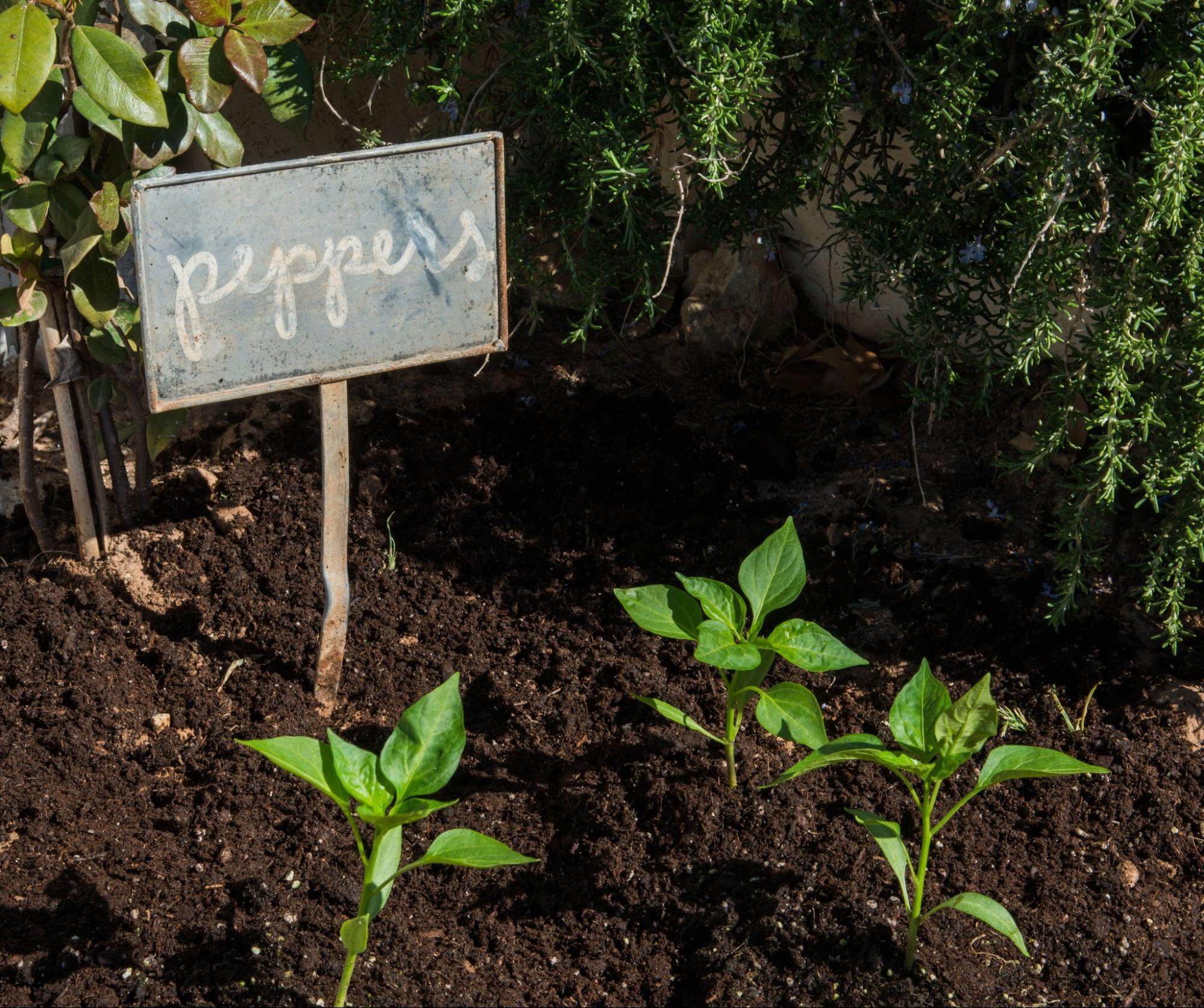 Plant Your Own Seedlings | At Home: A Blog by Joanna Gianes
